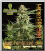 Philosopher Lemon Auto CBD Fem 5 Ganja Seeds